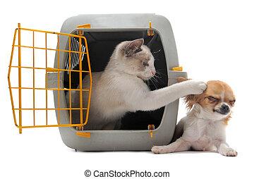 mascota, chihuahua, portador, gatito