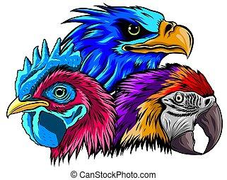 mascota, gallo, ilustración, cabeza, vector