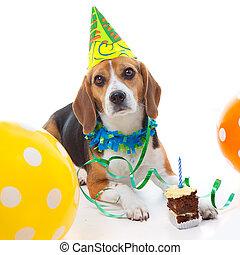 mascota, primer cumpleaños, fiesta, celebración