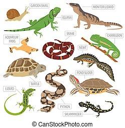 mascota, sobre, icono, white., mascotas, mantener, reptiles...