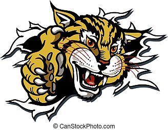 mascotte, wildcat
