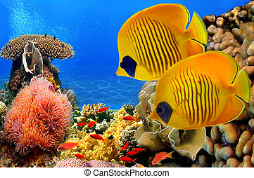 Masked butterfly fish (Chaetodon semilarvatus) and coral reef.