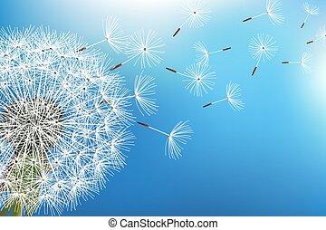 maskros, blåsning, frö, på, blåttbakgrund