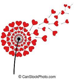 maskros, ludd, rött hjärta, format, vita, bakgrund