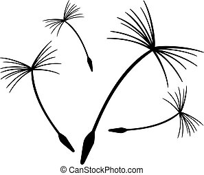 maslacak dandelion 00 - Dandelion seeds in the wind