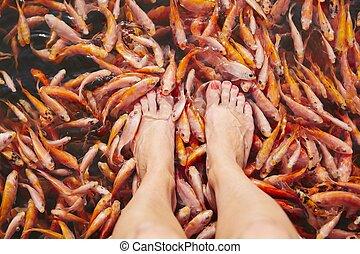 massagem, por, peixes