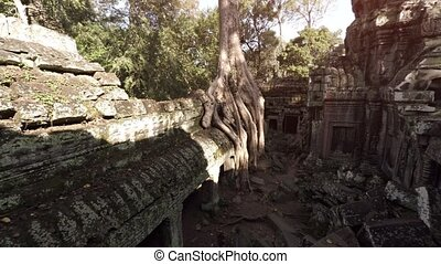 Massive Tree Roots Sprouting from Ancient Cambodian Temple...