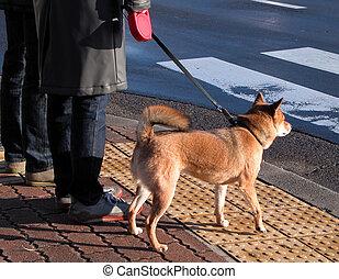 Master and dog - An original city aspect....