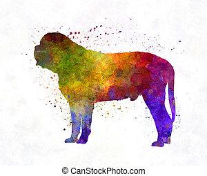 mastiff, dans, aquarelle