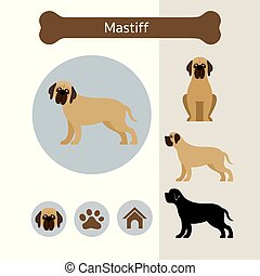 Mastiff Dog Breed Infographic - Illustration, Front and Side...