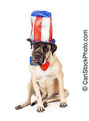 Mastiff Dog on Independence Day