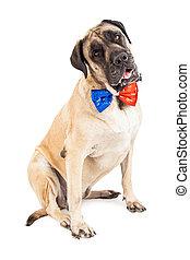 Mastiff Dog Red and Blue Festive Tie