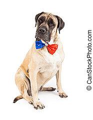 Mastiff Dog Wearing Independence Day Tie