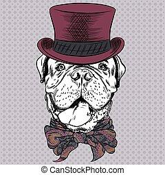 mastiff, vecteur, hipster, dessin animé, chien, francais, rigolote