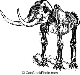 Mastodon or Mammut sp., vintage engraving - Mastodon or...