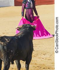 matador, espagnol