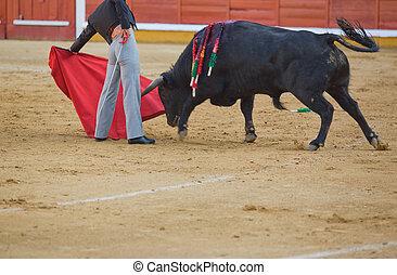 matador fighting