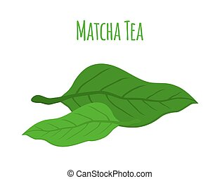 Matcha tea leaves - japaneese drink, natural organic plant. Flat style