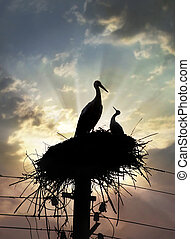 Mother stork and nestling in the nest against sunset