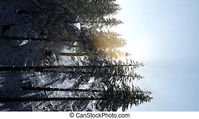 matin, à feuilles caduques, forêt, brumeux, hiver