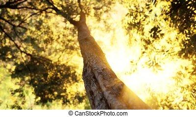 matin, brumeux, forêt, tôt