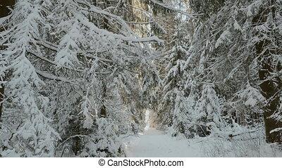 matin, forêt, hiver