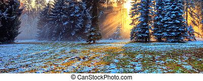 matin, forêt, sunrays, hiver