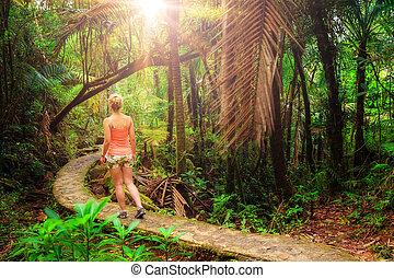 matin, jungle, randonnée