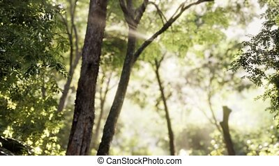 matin, tôt, brumeux, forêt
