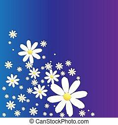Matricaria camomilen blue-violet