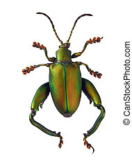 A matte green beetle isolated on a white background.