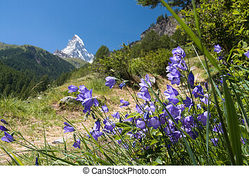 matterhorn, -, alpes suisses