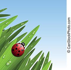 mattina, erba, e, coccinella