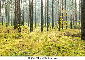 mattina, in, autunno, legno