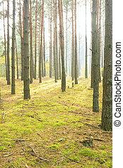 mattina, in, autunno, wood.