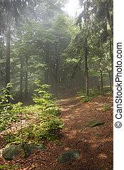 mattina, in, il, foresta