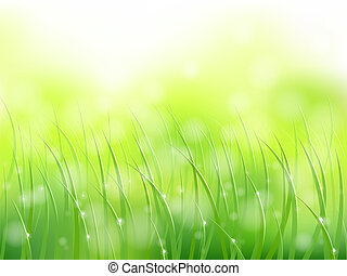 mattina, luce sole, erba, presto, rugiada, softfocus, modello