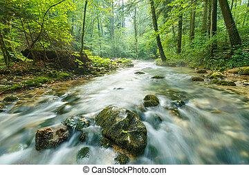 mattina, paesaggio, con, fiume, e, foresta