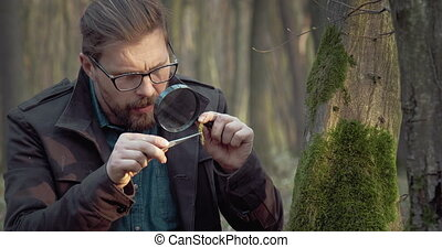 Mature biologist studying features of live plants at forest...