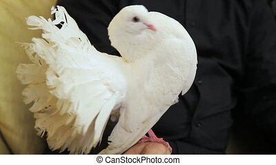 Mature Couple Holding Doves