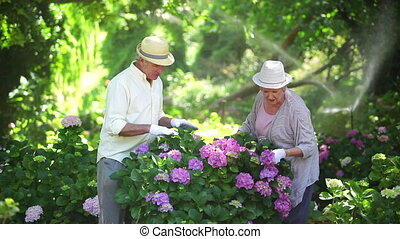 Mature couple pruning shrubs in a garden