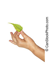 Mature hand and fresh leaf