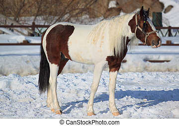Mature horse on a morning walk.