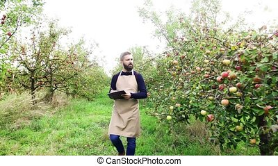 Mature man with clipboard checking apples in orchard in...