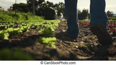 Mature man working on farm