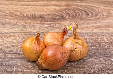 Mature onions on a wooden background