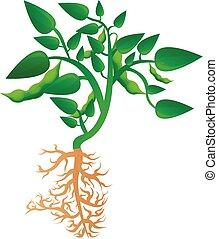 Mature soybean plant icon, cartoon style