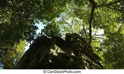 Thick branches of mature, tropical trees provide protecting shade over an ancient temple ruin in Southeast Asia. Video 4k