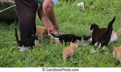 Mature woman feeds the stray cats