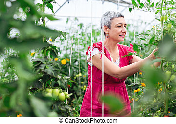Mature woman picking tomato in greenhouse